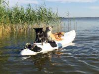 Piraten auf Beute - Bild 1: Darssurlaub - Wassergrundstück mit Hund - eingezäunter Terrasse, Angeln